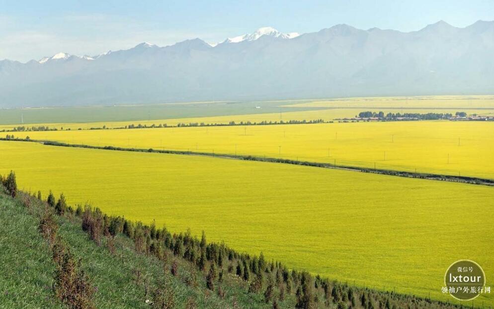 """2008年,门源油菜花被评为国家4a景区和青海省""""我心中最美丽的十大"""