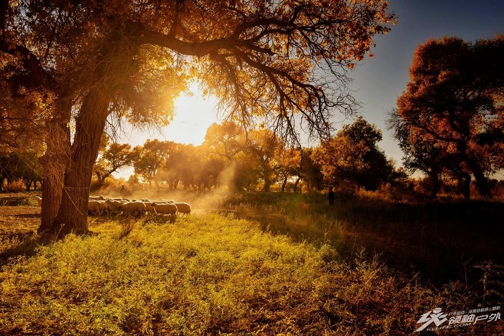 世界上1200个森林公园中唯一的沙漠胡杨林公园!