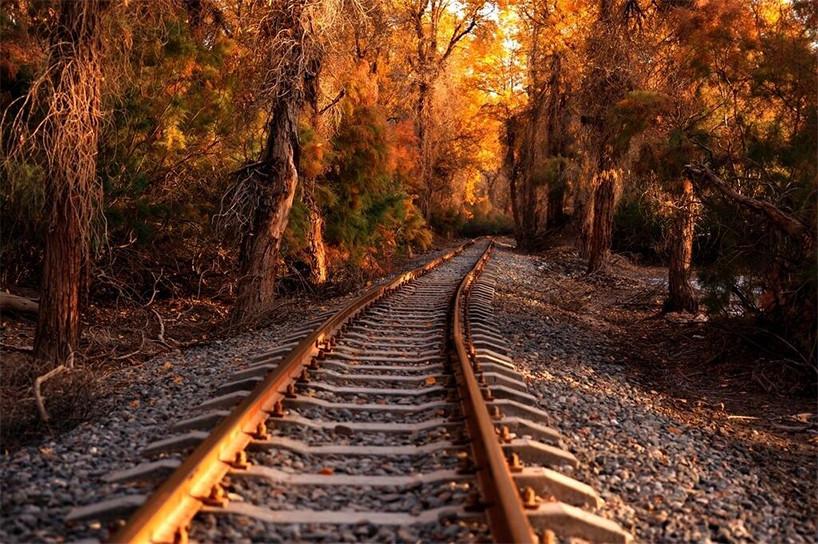 秋季拍摄新疆胡杨——轮台塔里木胡杨林公园