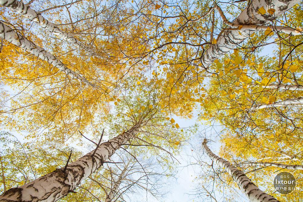 喀纳斯禾木