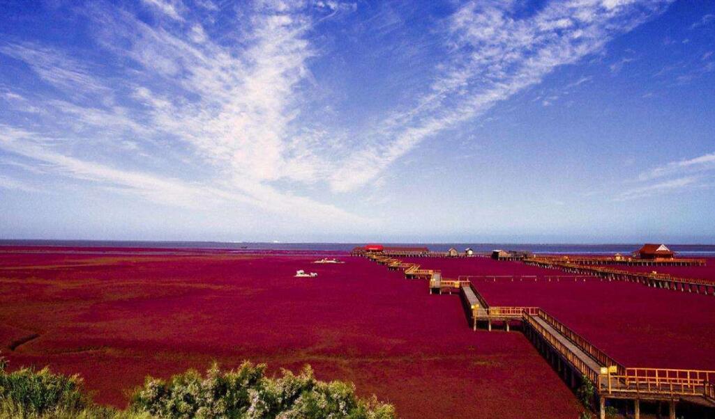 红海滩风景区是国家4a级景区,位于辽宁省盘锦市大洼县赵圈河乡