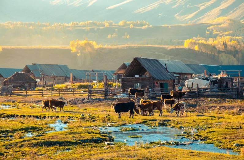 北疆白哈巴旅游