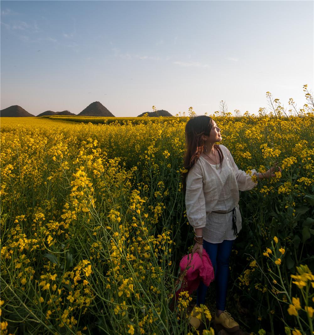 羅平金雞峰油菜花海觀賞攝影玩法