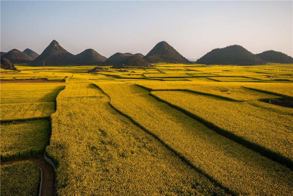春季有羅平油菜花,夏季有羅平金雞峰叢七彩花田園區