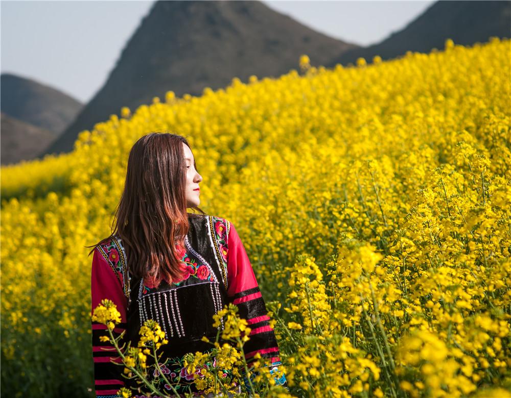 前往云南罗平金鸡峰丛与螺丝田旅游看油菜花海