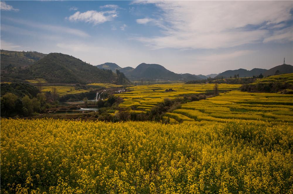 罗平油菜花节旅游