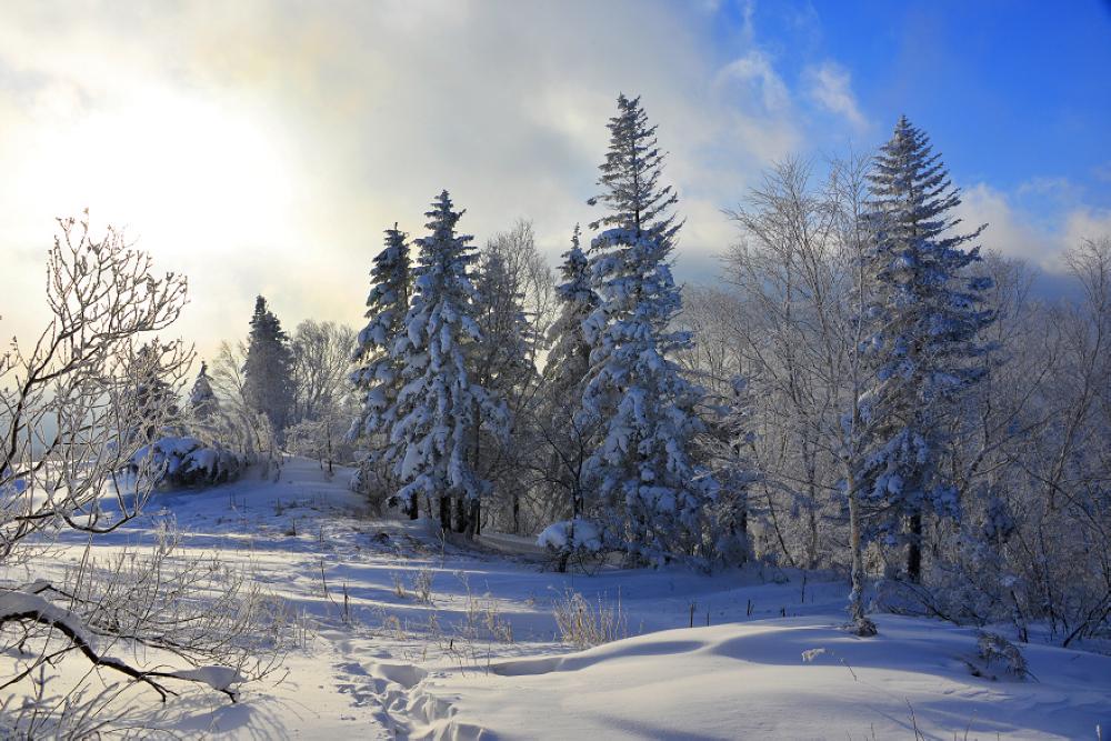 雪乡旅游景点