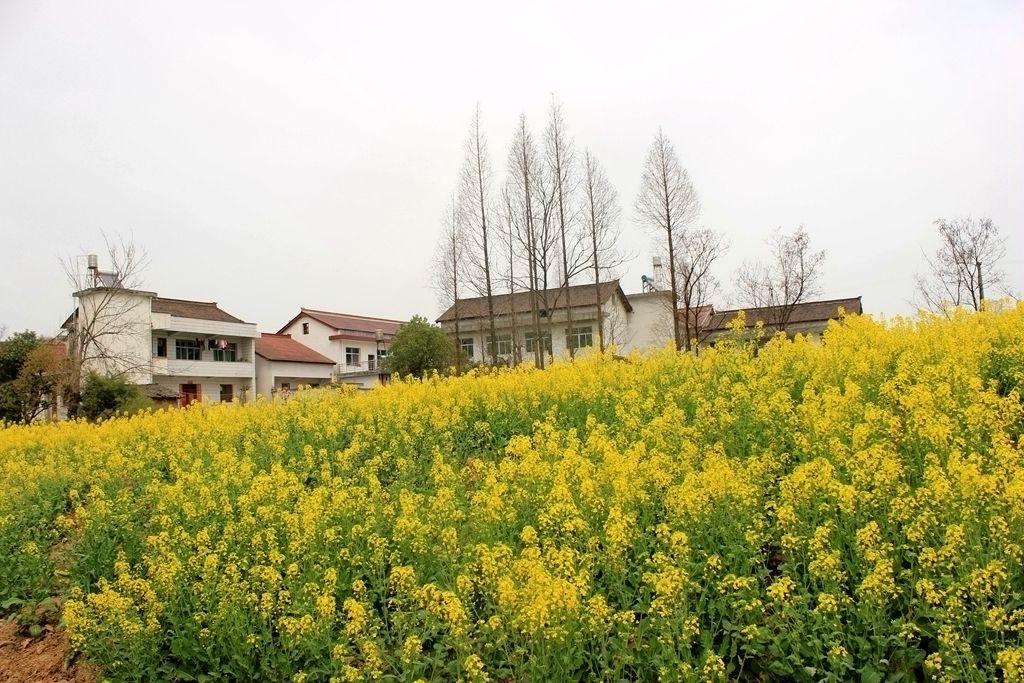 汉中油菜花旅游