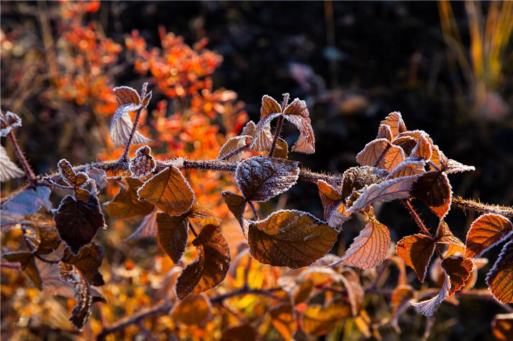 秋季呼伦贝尔大草原