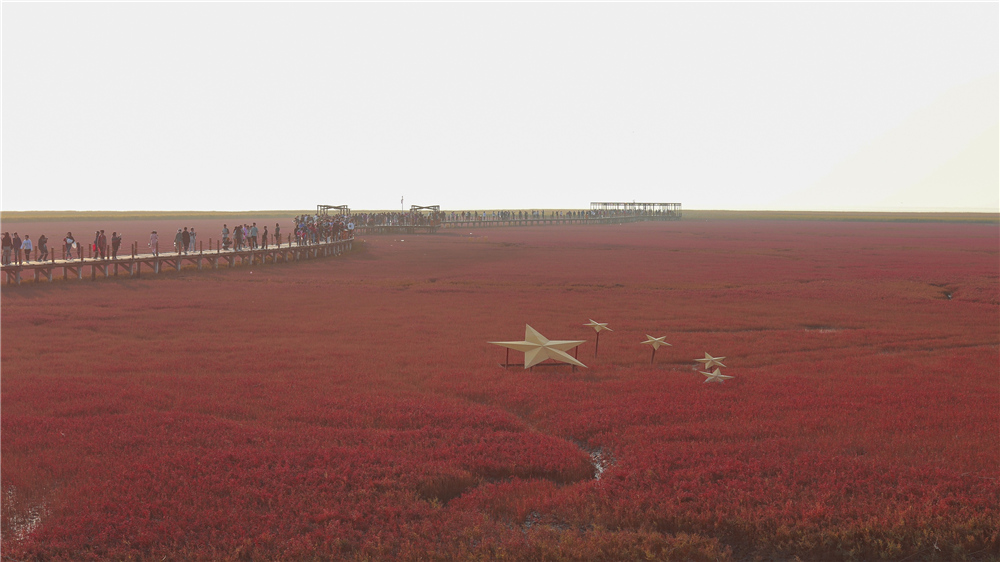 红海滩旅游