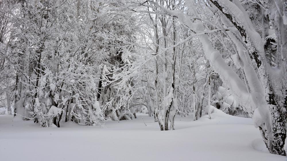 冬季雪乡怎样玩?雪乡游玩景点攻略保举